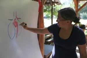 Laurel teaching heart